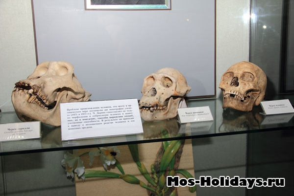 В Дарвиновском музее