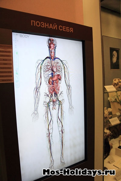 Интерактивная панель, которая показывает анатомию человека в Дарвиновском музее