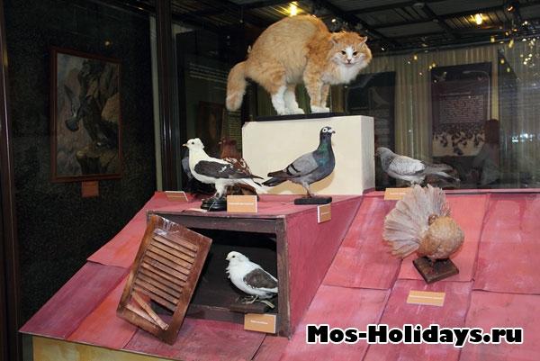 Выставка голубей в Дарвиновском музее