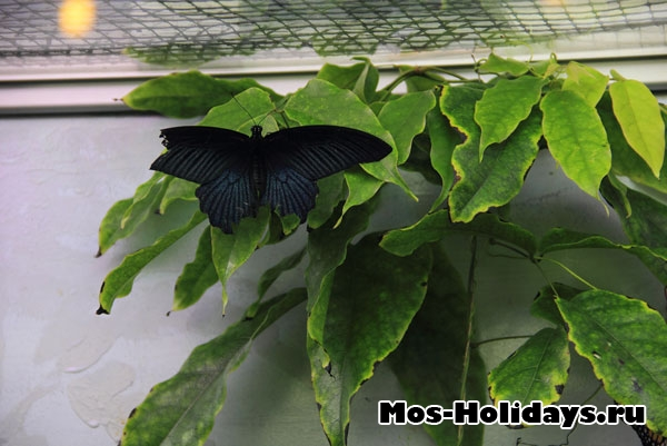 Бабочка в выставочном комплексе музея Дарвина