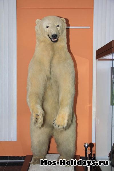 Большой белый медведь в выставочном комплексе музея Дарвина