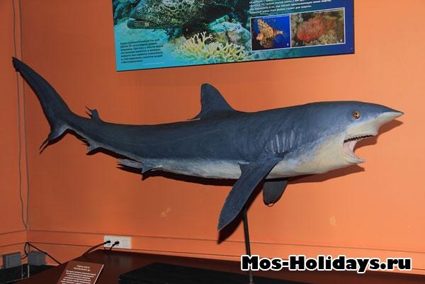 Акула в выставочном комплексе музея Дарвина