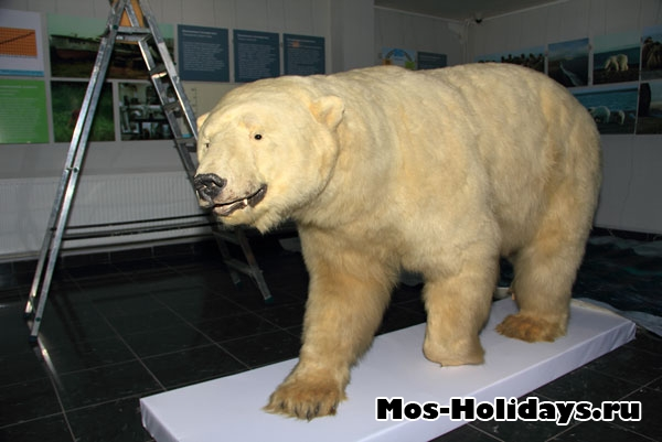 Белый медведь в выставочном комплексе Дарвиновского музея
