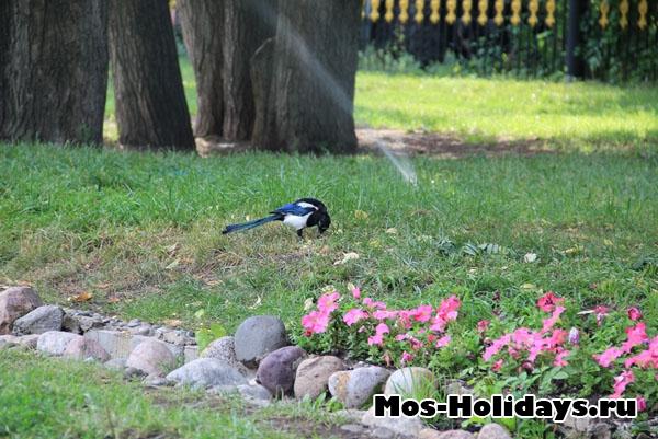 Сорока в Екатерининском парке