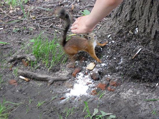 Белки в Измайловском парке берут едё с рук