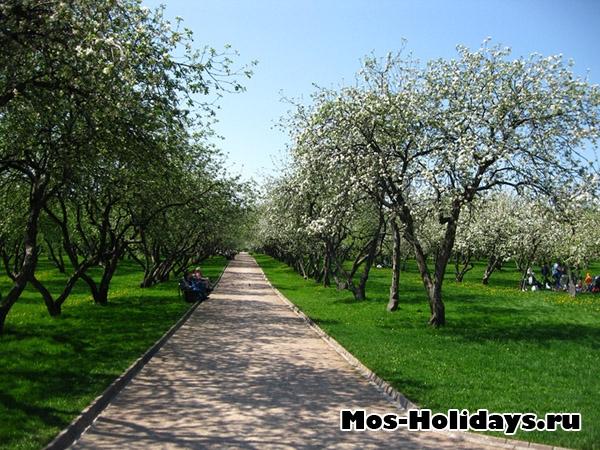 Вознесенский сад в усадьбе Коломенское