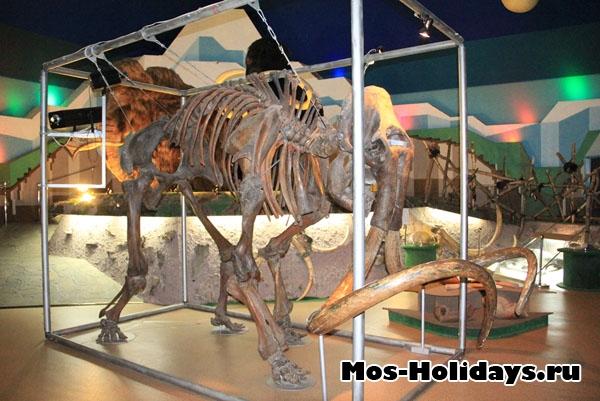 """Скелет мамонта в музее """"Ледниковый период"""""""