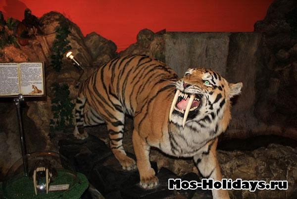 """Саблезубый тигр в музее """"Ледниковый период"""""""