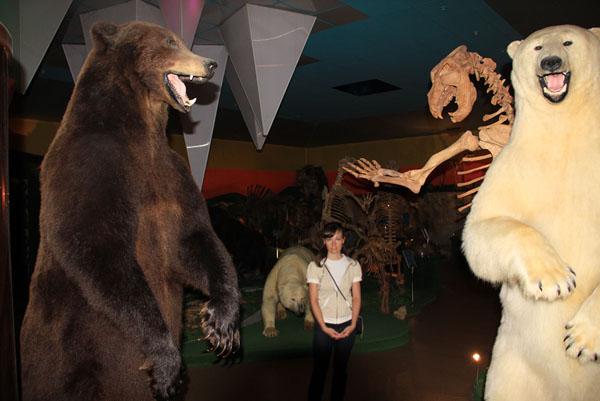 """Медведи в музее """"Ледниковый период"""""""