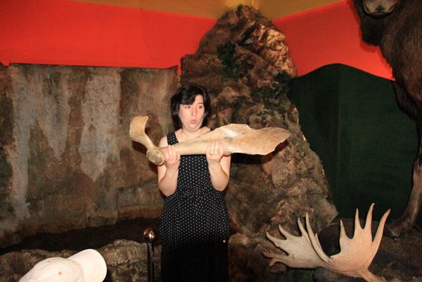 Экскурсово со штангой рогов лося ледникового периода
