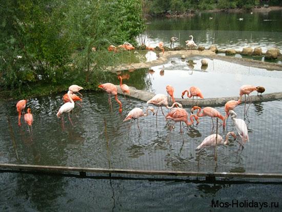 Фламинго в Московском зоопарке