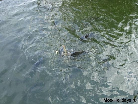 Рыбы в Московском зоопарке размером с руку