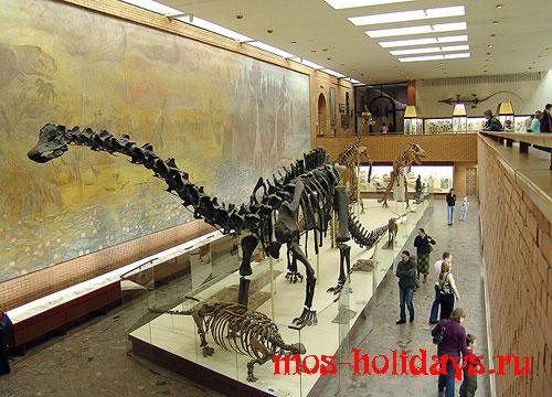Скелет самого большого динозавра в Палеонтологическом музее - диплодока