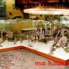 Скелеты парейазавров в Палеонтологическом музее