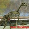 Завролоф в Палеонтологическом музее