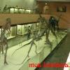 Главный зал Палеонтологического музея