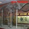 Скелет мамонта в Палеонтологическом музее