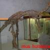 Фото из Палеонтологического музея