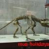 Экспонат Палеонтологического музея