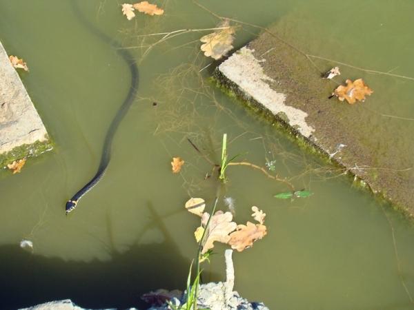 Уж в пруду Лосиного острова