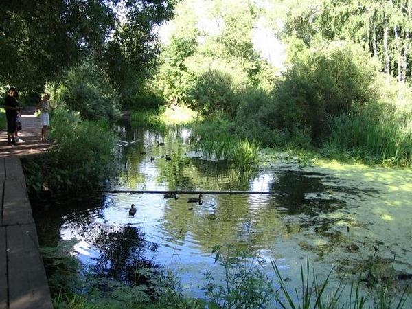 Заросший пруд в парке Покровское-Глебово-Стрешнево