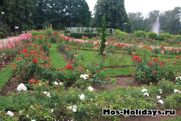 Большой розарий в Сокольниках