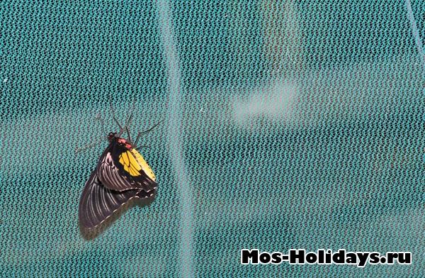 Тропическая бабочка на ВВЦ