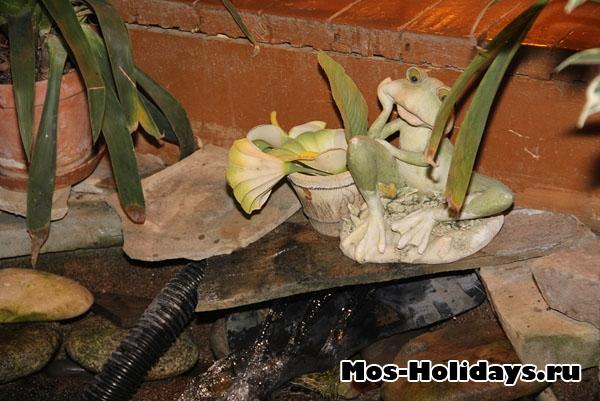 Лягушки на выставке бабочек на ВВЦ