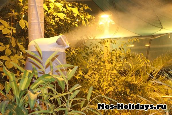 Увлажнитель воздуха на выставке тропических бабочек на ВВЦ