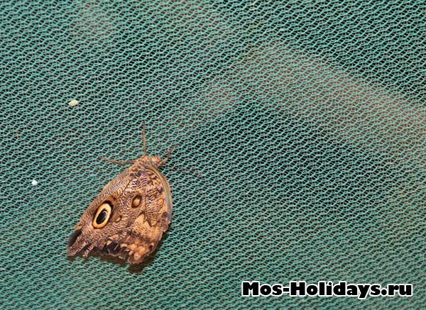 Одна из бабочек с выставки на ВВЦ