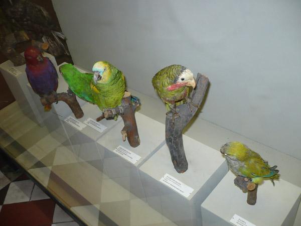 Попугаи в Зоологическом музее МГУ