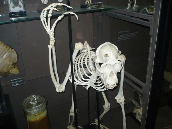 В косном зале Зоологического музея МГУ