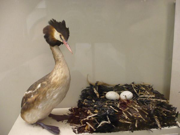Птицы в Зоологическом музее МГУ