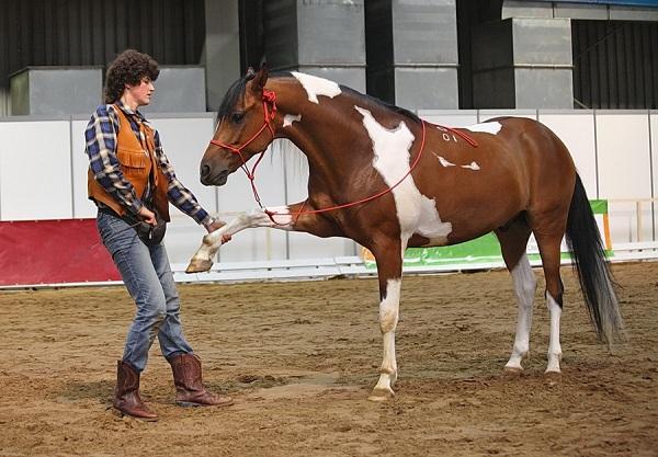 выставка лошадей «Эквирос-Professional 2015»