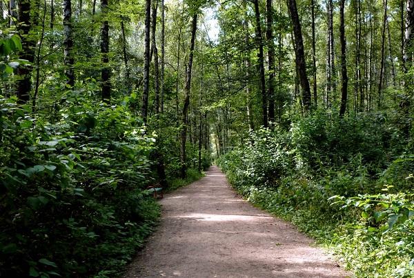 Алешкинский лес - живописный парк