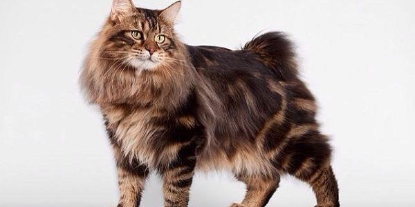 Международная выставка кошек «Звезда – 2015»