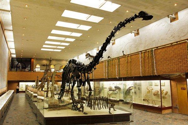 Палеонтологический музей в Москве