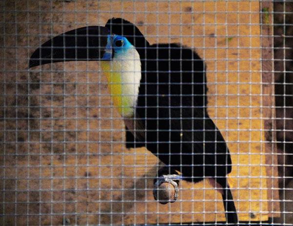 Выставка экзотических птиц на ВДНХ