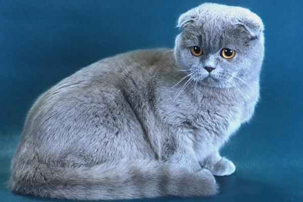 Выставка кошек «Кэт-Салон-Сентябрь»