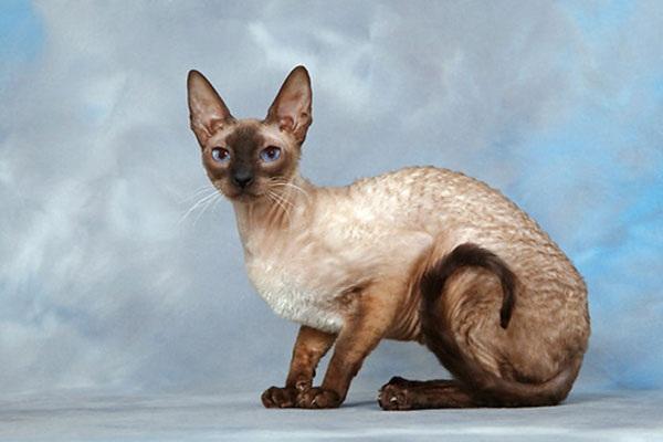 Выставка-продажа котят «КоШарики Шоу» в КВЦ «Сокольники»