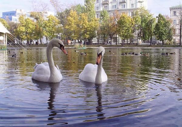 kontaktnye_zooparki_moskvy5