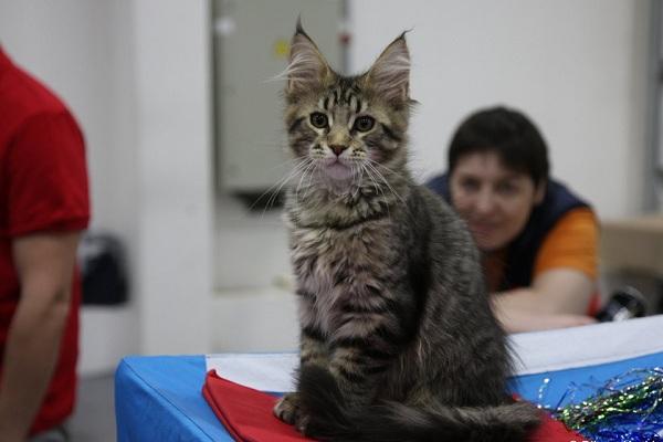 Международная выставка кошек «РосКошная Осень»