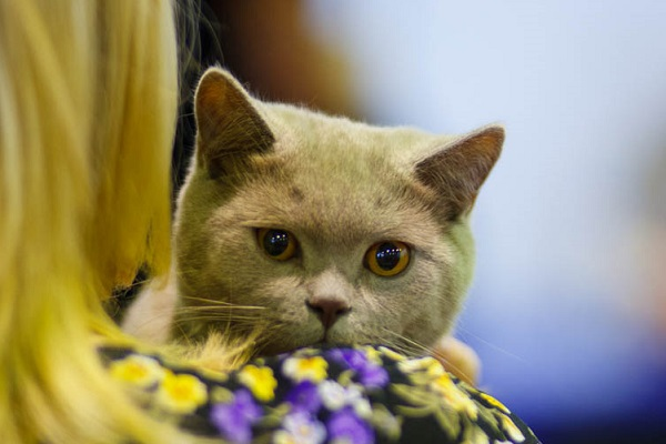 Международная выставка кошек «Астра»
