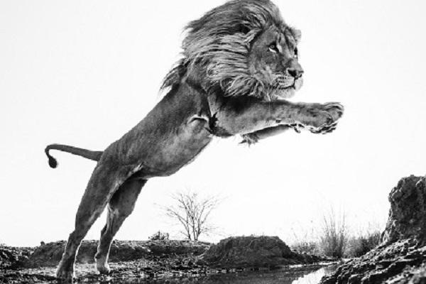 Фотовыставка «Встречи с дикой природой»