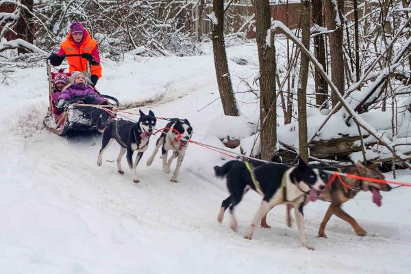 Экскурсия в питомник хаски (ездовых собак) «Северный»