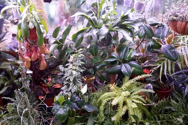 Хищные растения в Эврика-парке