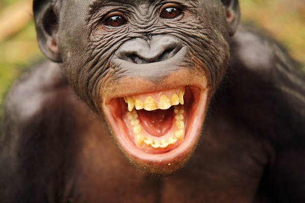 Фотовыставка «Бонобо»