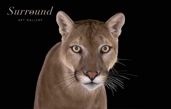 Выставка-продажа фотографии в стиле Fine Art «Легенды дикой природы»