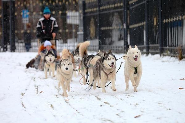 Зимняя праздничная программа в «Царицыно»