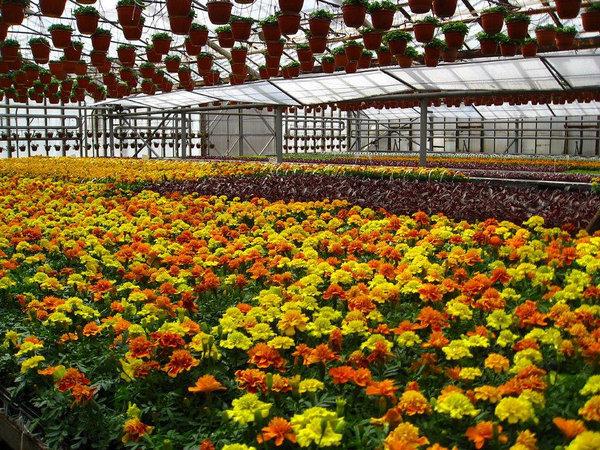 Измайловский совхоз декоративного садоводства